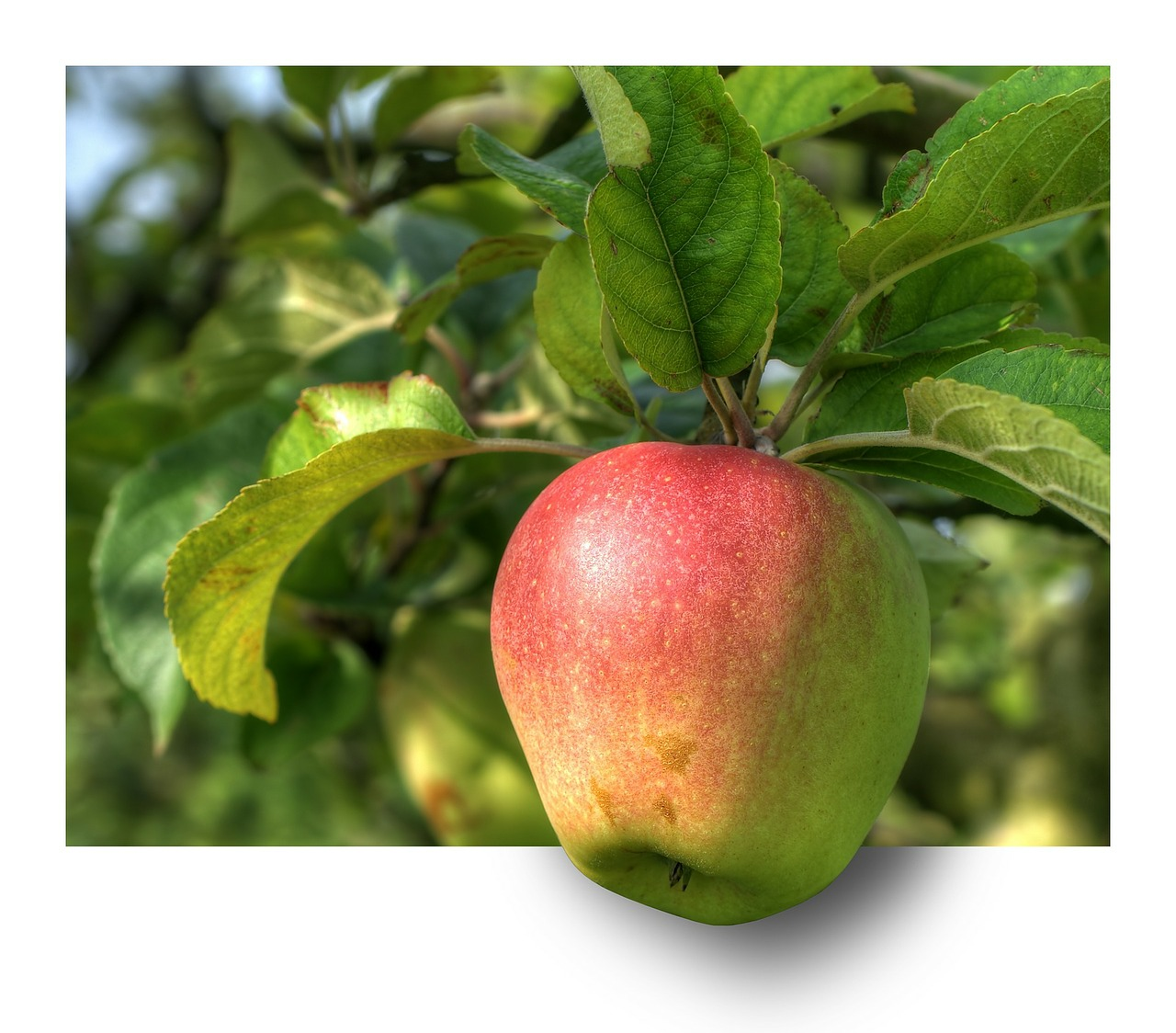apple 191004 1280